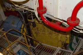 (Arctic Corsair) image courtesy of Clive Dennison (27)