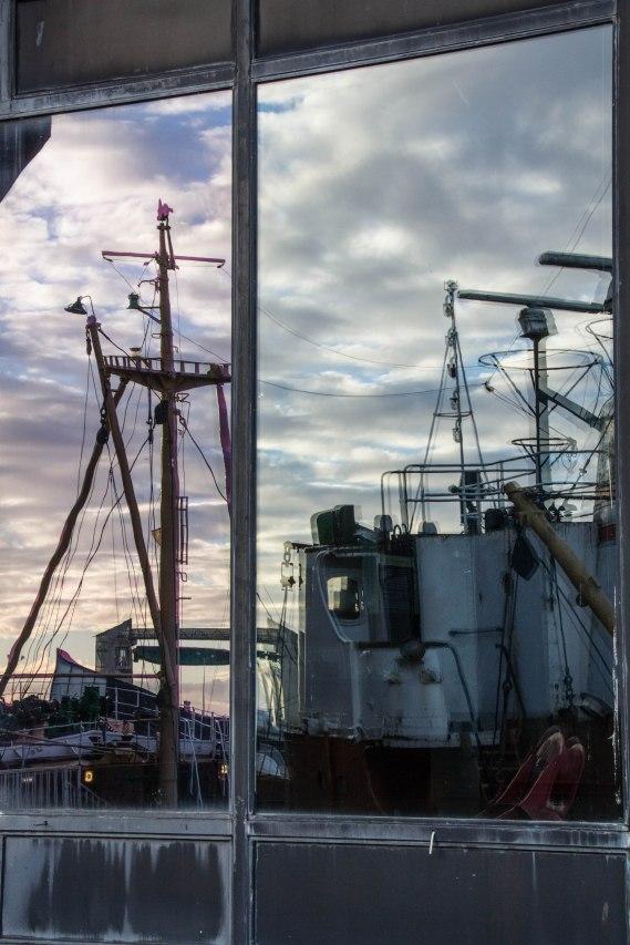 (Arctic Corsair) image courtesy of Clive Dennison (47)